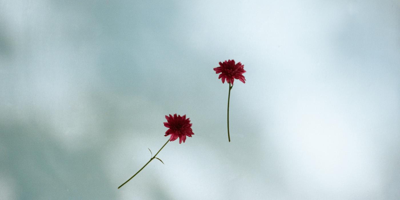 野口恵太写真展「FLOWER」