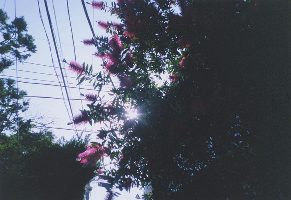 stayshoot_ichihashi_05